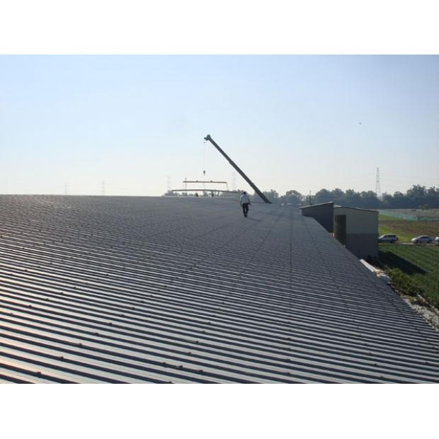 彰化溪州雞舍屋頂加蓋