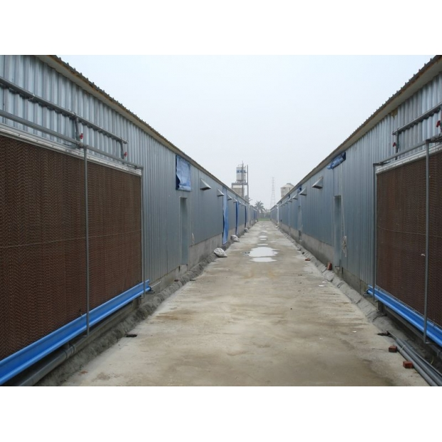 鋼構鐵皮屋 | 屏東縣萬丹鄉雞舍